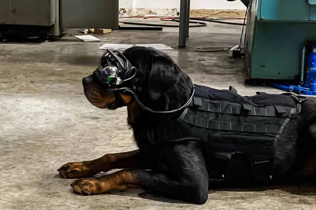 Prototype of AR Goggles for Military dogs