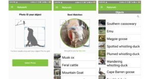 NatureAI Review: An App That Lets You Instantly Identify Animals, Birds, and More